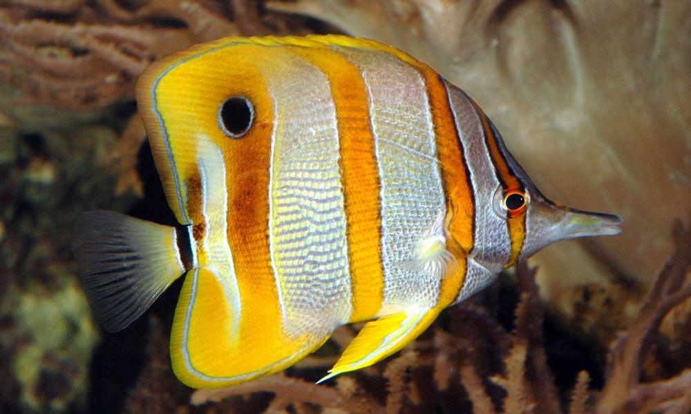 acquario-londra-b