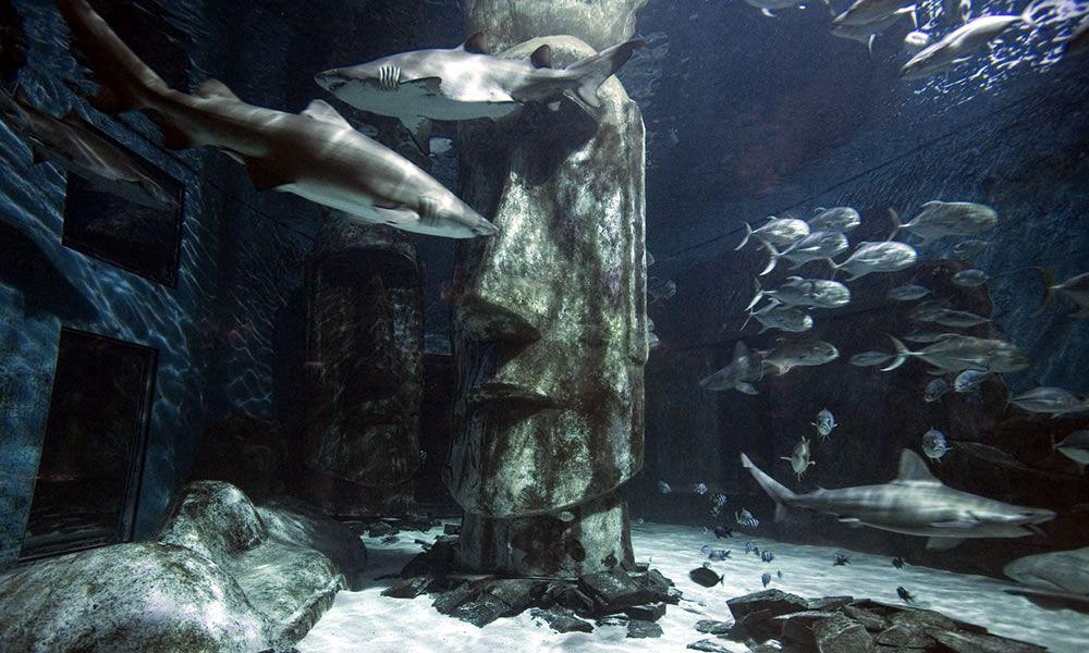 acquario-londra-c