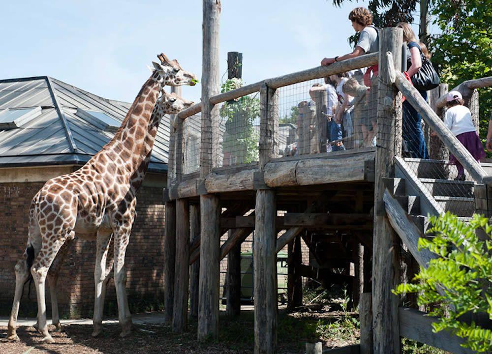 zoo-londra-a