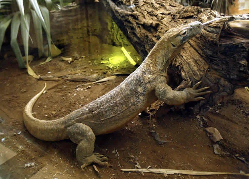 zoo-londra-c